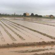Camps de Cal Peretó al baix llobregat després del temporal Glòria